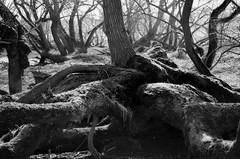 Heuckenlock (Andreas Meese) Tags: wood trees tree nature spring nikon decay hamburg natur reserve wald bume baum frhling naturschutzgebiet wilhelmsburg verfall zerfall sderelbe heuckenlock moorwerder d5100
