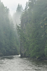 Chehalis River Fog (Fish as art) Tags: canada britishcolumbia salmon pacificnorthwest wilderness fraservalley chehalisriver salmonrivers salmonconservation canadesewildernis britishcolumbiarivers