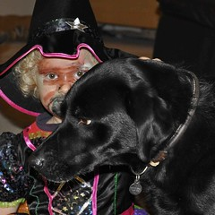 Shouldn't witches have black cats? (Chris Mullineux) Tags: halloween nikon labrador witch molly labradorretreiver mullineux