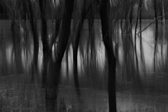 woods (nevil zaveri (thank you for 10million+ views :)) Tags: longexposure trees blackandwhite bw india reflection heron nature water monochrome dead death photo blog pond dusk wildlife stock lakes images motionblur bark trunk wilderness roadside conceptual zaveri egret acacia colony gujarat stockimages gujrat nevil paintedstork kheda nevilzaveri