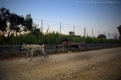 image (marco.sottile) Tags: dog funny labrador levitation levitazione d5100