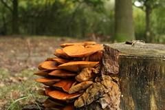 nature thenetherlands hilversum urbanwoods canon600d melisatgportfolio