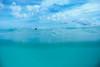 A drift (Lost Odyssey) Tags: ocean shells beach water sunrise rocks surf waves florida barrel paddle wave surfing atlantic surfboard tropical surfers reef skimboard