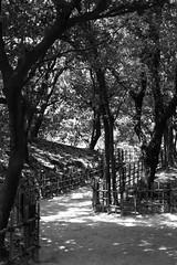 japanese garden 03 (mathias-erhart) Tags: park trees light shadow tree japan fence garden blackwhite path takamatsu   ritsuringarden