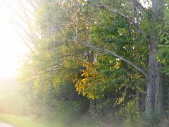 autumn (germancute) Tags: autumn nature leaves landscape leaf laub herbst landschaft