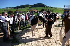 Jubiläumsviehschau Biglen (Martinus VI) Tags: viehschau viehzucht viehzuchtverein biglen landwirtschaft landwirt bauer kuh kühe milchvieh vzvbiglen swiss cattle competition concours des vaches vache cow cows fleckvieh