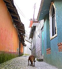 La vida no es fácil para todos Life is not easy for everyone (Raul Jaso) Tags: dog dogs cane mexico can perro perros cani streeter realdelmonte perrocallejero quiltro pueblomagico pueblosmagicos perromestizo dmcfh8 panasonicdmcfh8