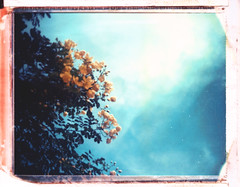 upwards (a.lower.photo) Tags: flowers sky polaroid lomo lomography bluesky ishootfilm lookingup polaroid669 peelapart polaroidweek filmisnotdead roidweek instandfilm believeinfilm staybrokeshootfilm peelapartproject