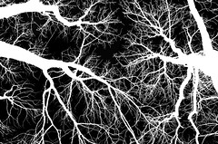 """""""Complex"""" (porCography) Tags: trees white black dark serbia thoughts complexity belgrade metaphor invert surounding"""