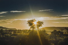 A ball of glare between two trees (zjasonqian) Tags: new sunrise mexico zuni blackrock