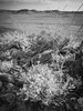boolcoomatta sept 2014 - 9291269 - wiperaminga (liam.jon_d) Tags: blackandwhite bw monochrome landscape mono arty desert australian photojournalism conservation australia outback sa southaustralia bha semiarid nocolour withoutcolour southaustralian billdoyle bushheritageaustralia westernloop blackandwhitephotojournalism conservationreserve abhf boolcoomatta bushheritage outbacklandscape australianbushheritagefund boolcoomattareserve wiperaminga wiperamingahill eremophilaloop