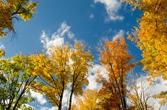 From the forest floor (Bill VanderMolen) Tags: autumn fall fallcolor michigan sunny fair fallinmichigan