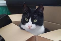 Simon im Karton