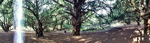 Old Winchester Hillfort Yew Woods