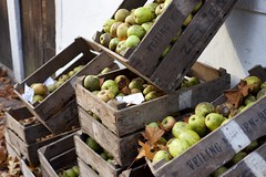 DSC_5855 (AperturePaul) Tags: apple netherlands 50mm nikon apples d600