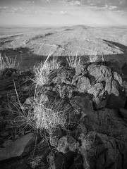 boolcoomatta sept 2014 - 9291369 - wiperaminga (liam.jon_d) Tags: abhf cymbopogonambiguus mono arty australia australian australianbushheritagefund bw bha billdoyle blackandwhite boolcoomatta boolcoomattareserve bushheritage bushheritageaustralia conservation conservationreserve cymbopogon desert eremophilaloop landscape monochrome outback outbacklandscape sa scentedgrass semiarid southaustralia southaustralian westernloop wiperaminga wiperamingahill mostintblackwhiteimset popularimset pickmeset