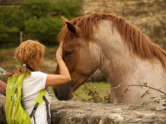 El caballo del Jerte (Javier Malmierca) Tags: horse del caballo valle blonde jerte javiermalmierca2014