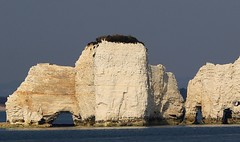Old Harry Rocks, Dorset Coastline (19) (Richard Collier - Wildlife and Travel Photography) Tags: england seascape landscape dorset jurassic costal coastalcliffs oldharryrocks