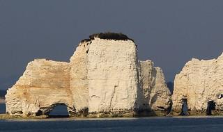 Old Harry Rocks, Dorset Coastline (19)