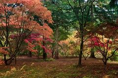 Autumn Colours (lloydie1963) Tags: autumn red nature landscape nikon walks colours view display walk arboretum explore lee nd herefordshire fx hereford grad d610