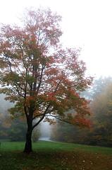 Misty Parkway (shadamai) Tags: autumn trees orange leaves fog foggy northcarolina parkway blueridgeparkway