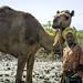 Momina ali, 10, tends a camel in Afar region of Ethiopia