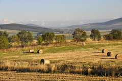 Sunny Autumn Morning (magaroonie) Tags: sol aberdeenshire fields bales drumblade 52wyw