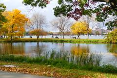 P1000214 (rbaladiang) Tags: boston river charles panasonic fz1000