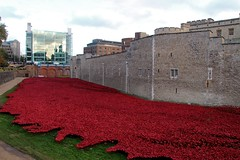 Poppies at the Tower of London (martin97uk) Tags: uk red england london tom paul blood poppy poppies piper lands swept moat cummins seas