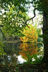 Autumn framed. (artanglerPD) Tags: trees lake tree green water reflections golden branches ferns fyviecastlegrounds