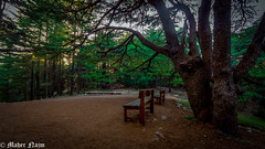 Happy Bench Monday (MNmagic) Tags: trip travel lebanon forest bench happy sony explorer sigma cedar alpha monday aley a77 mountlebanon arwad sigma1020