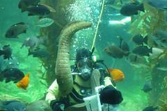 BAS Comic Con Dive Show_12