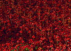 Poppies - Blood Swept Lands and Seas of Red (SarahO44) Tags: world uk london tower tom night canon ceramic paul blood war united first kingdom poppy poppies piper swept moat cummins seas outbreak 6d