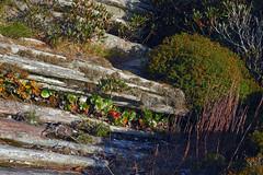 Hawksbill Mountain 2014-1017-43 (LostPineJim) Tags: autumn fall northcarolina linvillegorge burkecounty hawksbillmountain