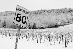 Early Winter in Wine Country (Grant is a Grant) Tags: bw white black nova 35mm vineyard nikon ns wolfville winery valley annapolis scotia nikkor 35 gaspereau d90 18g gaspereauvineyards