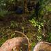 Chanterelles: Thierry et Kaliane sous les bois