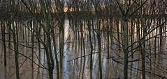 crucial moments... (sermatimati) Tags: nikon tramonto fiume alluvione po a1 pioggia piena pioppi controllo paura ansia argini tregua domenicasera sermatimati