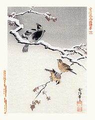 Common hill myna and yellow bunting (Japanese Flower and Bird Art) Tags: bird art yellow japan japanese book hill picture common fukui kano woodblock bunting religiosa myna emberizidae emberiza sturnidae gracula gessai sulphurata readercollection tsunenobu