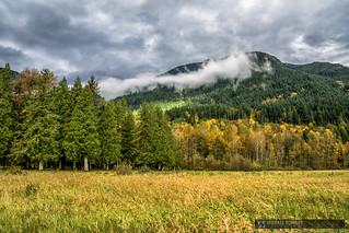 2014-10-25 Deroche Mountain Forest 05b