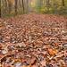 Autumn Ferry Grove Trail