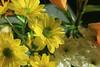 - (najla sohaibani) Tags: sun white flower green yellow canon شمس riyadh تصوير goodevening تصويري اخضر مساء اصفر السعوديه كانون ابيض مساءالخير منعدستي مساءالورد