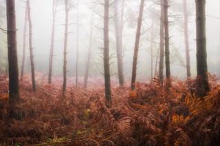 La forêt désolée