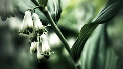 Morning dew! (mimmith) Tags: earlymorning morningdew treasureofnatur walkinnatur nature green flower