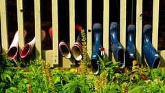 lake katherine. 2016 (timp37) Tags: july 2016 boots lake katherine summer garden illinois palos heights