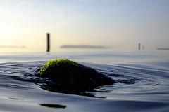 Flow (Wouter de Bruijn) Tags: fujifilm xt1 fujinonxf35mmf14r water lake waves ripple ripples wave rock flow serene zen calm nature landscape sunrise dawn morning outdoor depthoffield soft moss seaweed