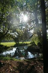 DSC02121 (plammerschop) Tags: maarssen landgoeddoornburgh herfst autumn sun flare
