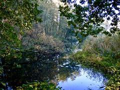 Autumn . (Franc Le Blanc .) Tags: panasonic lumix nature drunen baardwijkseoverlaat autumn herfst trees reflexes pond
