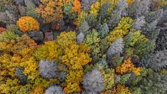 Alturas... (afmbrito) Tags: andrbrito joaquim beteriano portugal parque florestal vilareal centrodecincia dji inspire nature natureza