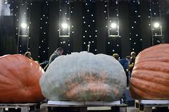 31. Dani ludaje, Kikinda (sindibiber) Tags: daniludaje pumpkindays kikinda pumpkin ludaja bundeva vojvodina banat