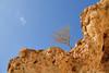 Cliff and shrub (indomitablemachine) Tags: shouab shu'ub shrub socotra yellow yemen hadhramautgovernorate ye